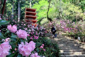 Đi du lịch Nara – Nhật Bản vào thời điểm nào?