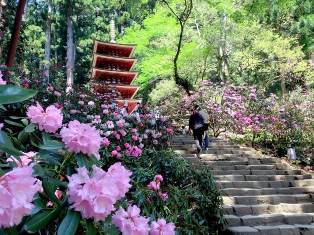 Mùa Xuân với các loài hoa ở Nara