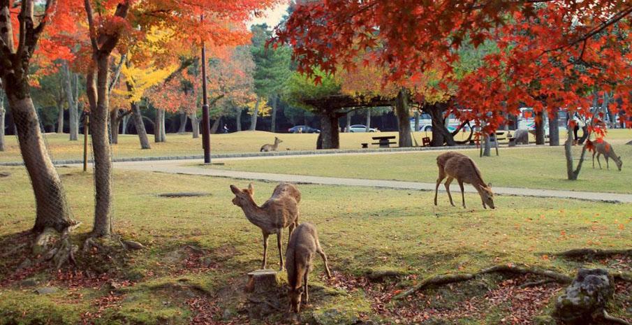 Mùa thu ở Nara