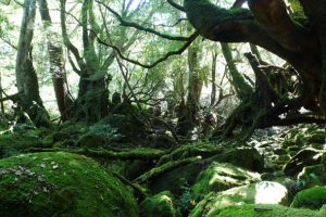 Khám phá đảo Yakushima tuyệt đẹp trong tour Nhật Bản