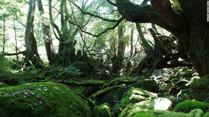 Đảo Yakushima