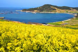 Hàn Quốc vẻ đẹp quyến rũ từ những hòn đảo độc đáo