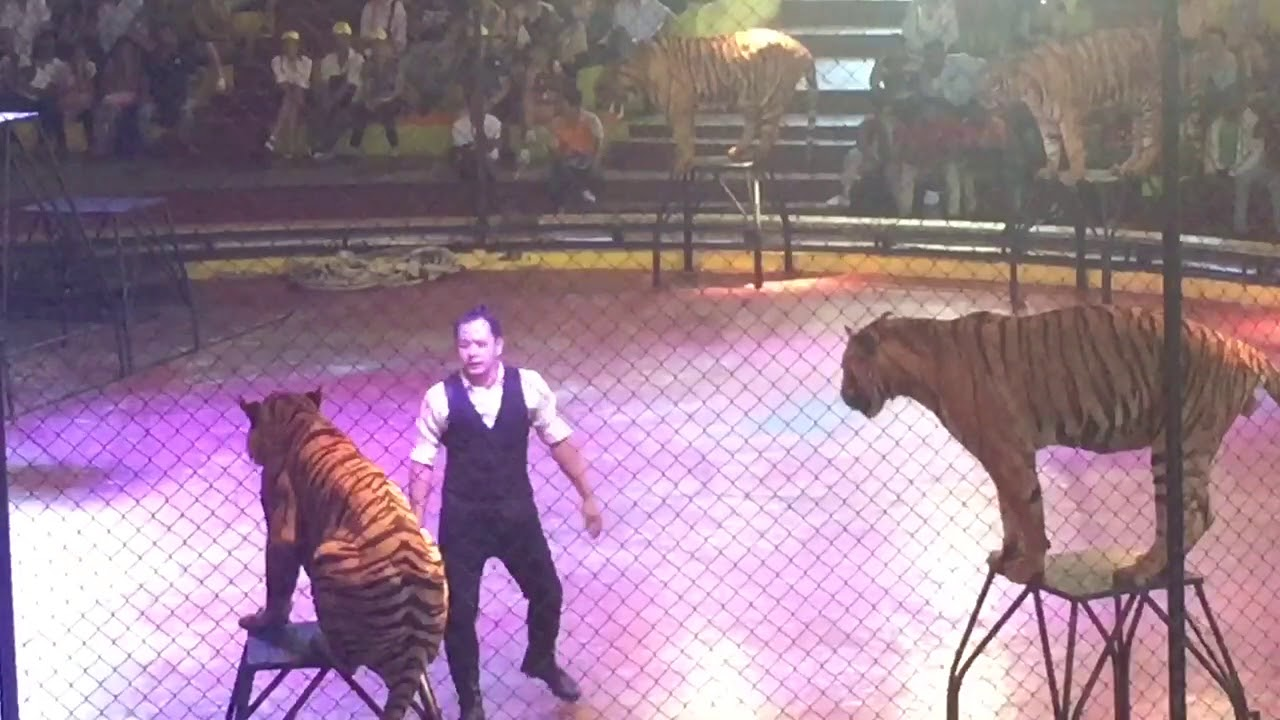 show diễn xiếc thú thái lan