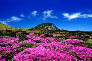 Đảo Jeju – điểm du lịch nổi tiếng không nên bỏ lỡ khi đi tour du lịch Hàn Quốc!!!