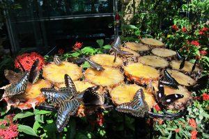 Vườn bướm Butterfly Garden ở Thái Lan có gì thú vị?