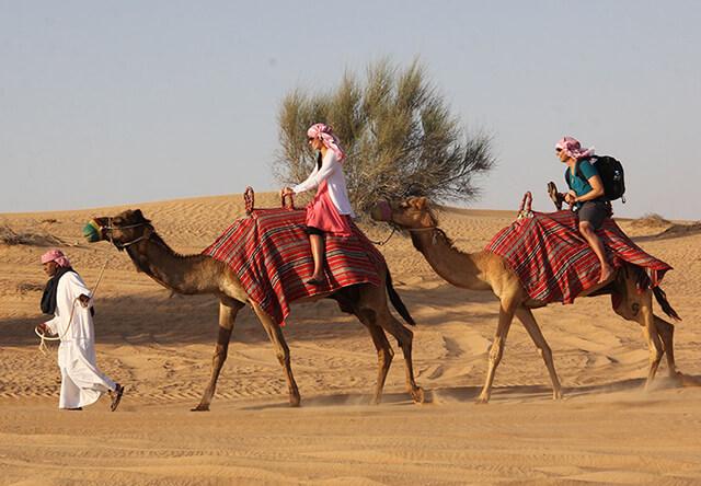 Đã đến với Sarafi trong chuyến du lịch Dubai thì du khách không thể bỏ lỡ cơ hội cưỡi lạc đà