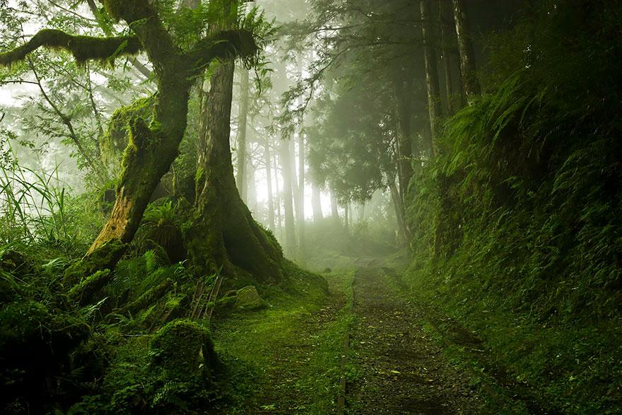 rừng Taipingshan