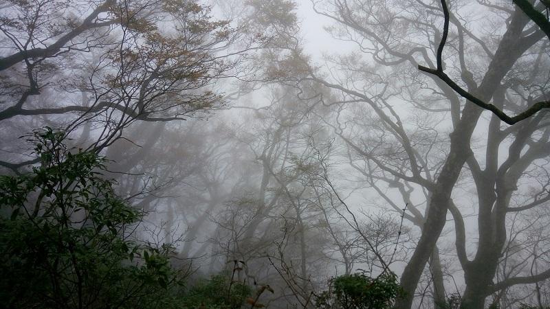 khu rừng tái sinh Taipingshan