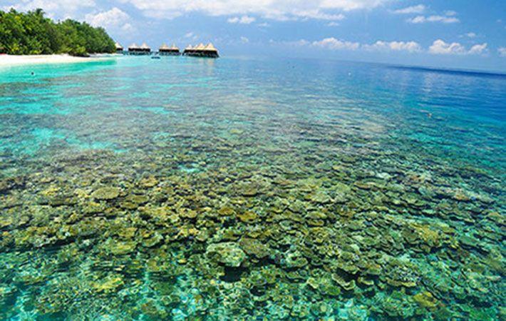 Đảo San Hô Koh Larn Pattaya Thailand