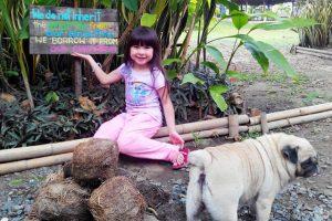 Làm giấy từ phân voi là một trong những trải nghiệm mới lạ, ấn tượng trong tour du lịch Thái Lan