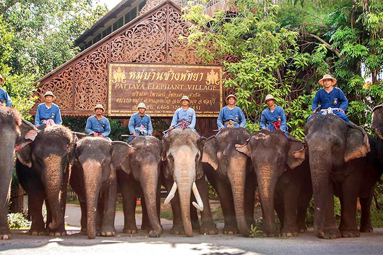 Làng voi Pattaya Thailand