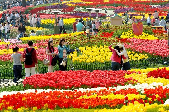Lễ hội hoa Tulip quốc tế ở Taean