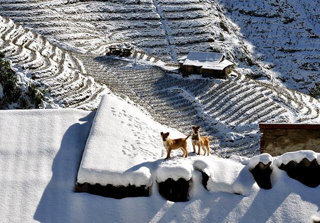 Mùa đông ở Sapa đón nhiều đợt tuyết phủ trắng xóa