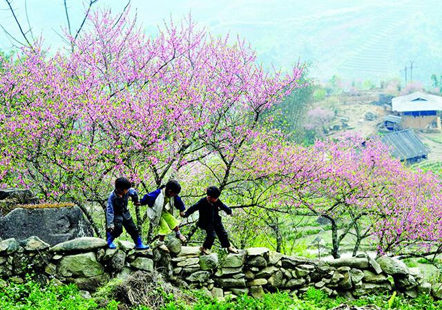 Xuân về khoác cho Sapa mang một vẻ đẹp mỹ miều, ngập tràn sắc hoa mận, hoa đào