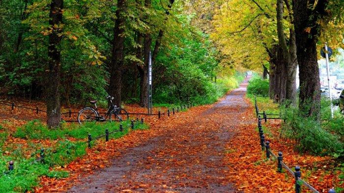 Con đường mùa thu lãng mạn ở Berlin