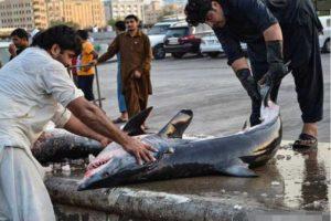 Sầm uất hải sản như thủy cung tại chợ Deira Dubai