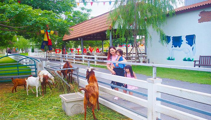 nông trại Swiss Sheep Farm Thái Lan