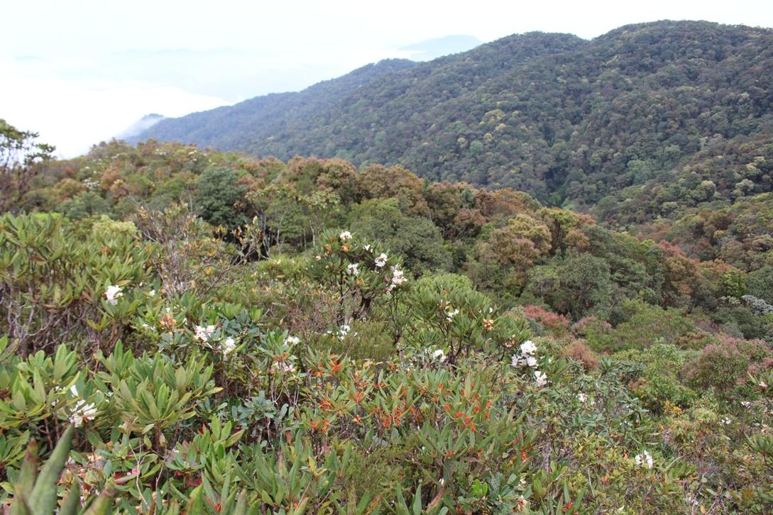 Hoa đỗ quyên ở núi Fansipan Sapa