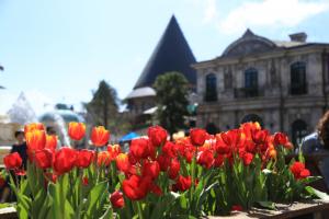 Ngắm hoa tulip trên đỉnh Bà Nà Hill khi đi du lịch Đà Nẵng