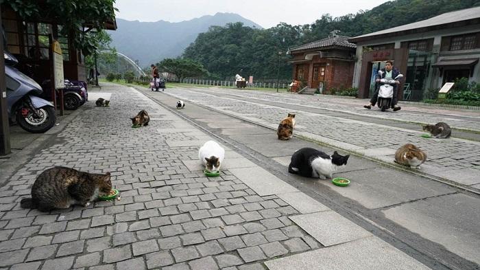 ngôi làng mèo hoang Houtong