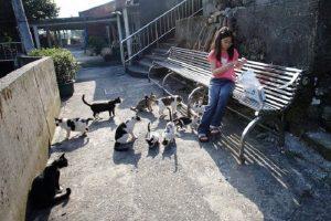 Đi tour du lịch Đài Loan 5n4d đừng quên ghé qua ngôi làng mèo hoang Houtong