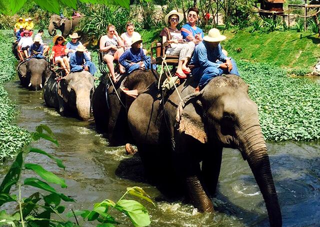Một trong những lí do mà bạn nên ghé Pattay một lần là vì những hoạt động độc nhất vô nhị tại Làng VoiMột trong những lí do mà bạn nên ghé Pattay một lần là vì những hoạt động độc nhất vô nhị tại Làng Voi