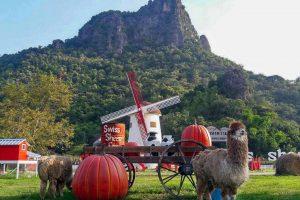 Tham quan nông trại cừu Swiss Sheep Farm khi đi tour Thái Lan