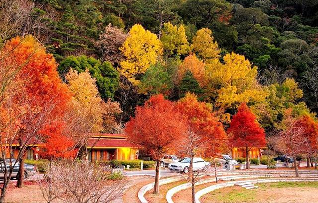 Thời tiết và khung cảnh mùa thu ở Đài Loan cực kì lí tưởng cho việc tham quan
