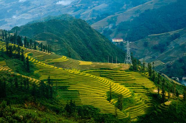Quang cảnh trên đường dẫn xuống thác Bạc là màu xanh ngút ngàn của đồi thông xen lẫn các vườn xu xu bên sườn đồi