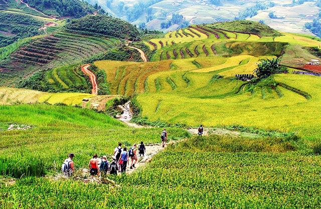Thung lũng Mường Hoa nằm ở xã Thầu Hào, cách thị trấn Sapa khoảng 8km về phía Đông Nam