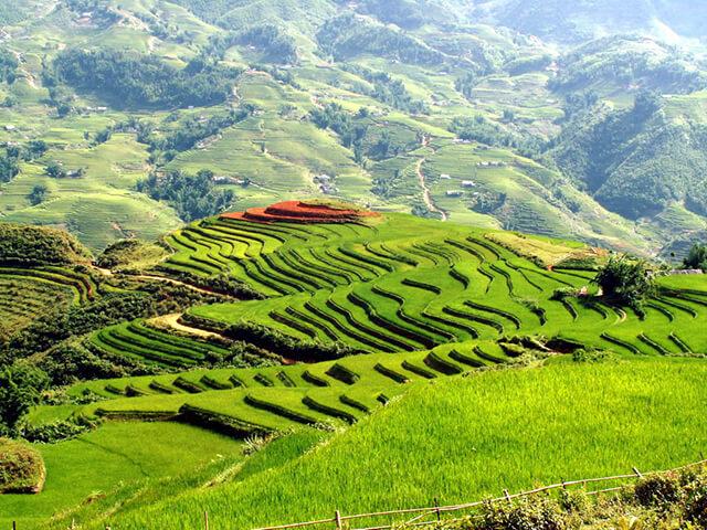 Đến với thung lũng Mường Hoa du khách sẽ được chiêm ngưỡng những thửa ruộng bậc thang đẹp choáng ngợp, kỳ vĩ