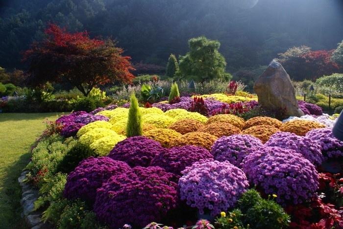 Các loài hoa tuyệt đẹp tại khu vườn Moring - Calm