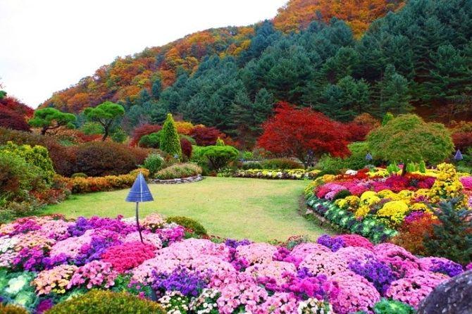 Khu vườn Morning Calm