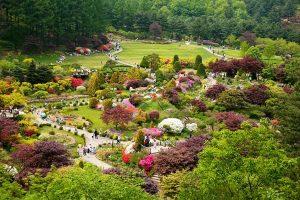 Ngất ngây với vẻ đẹp tại khu vườn Morning Calm ở Gapyeong, Hàn Quốc