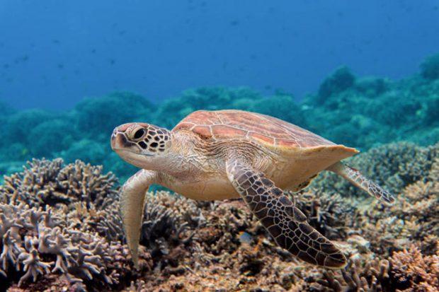 """Quần đảo Kerama – nhuộm trong biển """"Kerama Blue"""""""