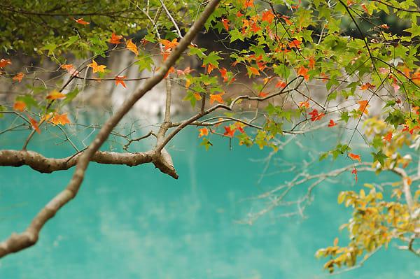 Ngắm lá phong ở đập thủy điện Shihmen