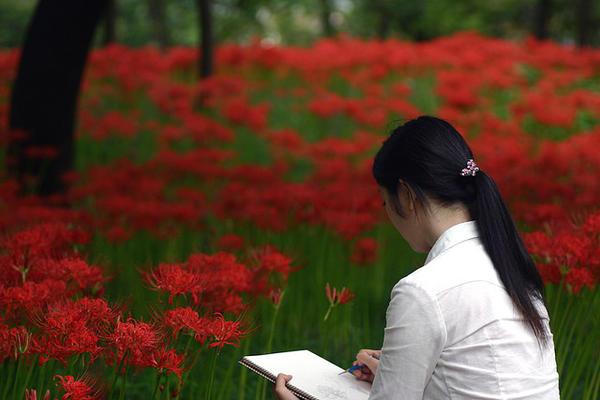 Hoa cung nhân thảo (Amaririsu, ア マ リ リ ス)