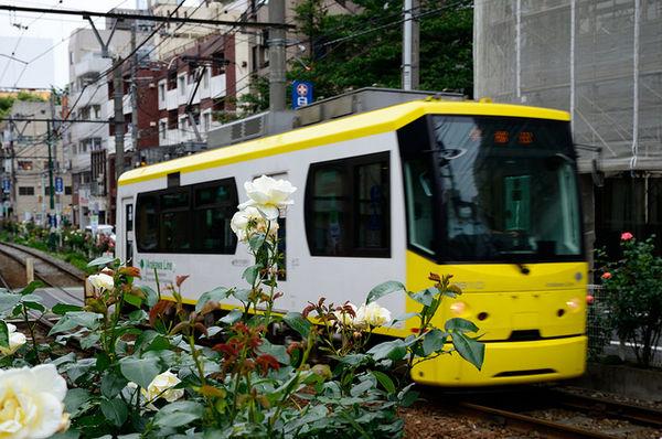 Hoa hồng vàng (Kiiroibara, 黄色 い 薔薇)