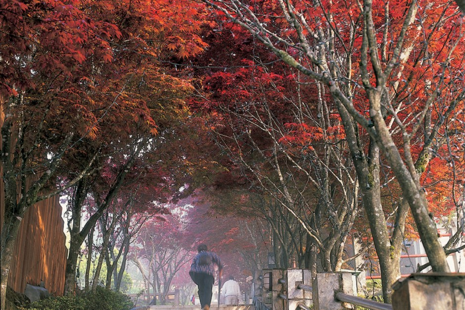 Ngắm lá phong tại vườn quốc gia Taipingshan