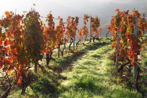 Tham quan cánh đồng nho ở thung lũng Douro khi đi du lịch Châu Âu