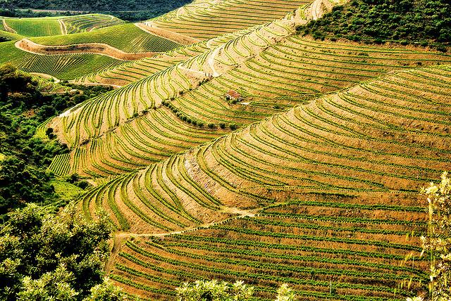 thung lũng Douro khi đi du lịch Châu Âu