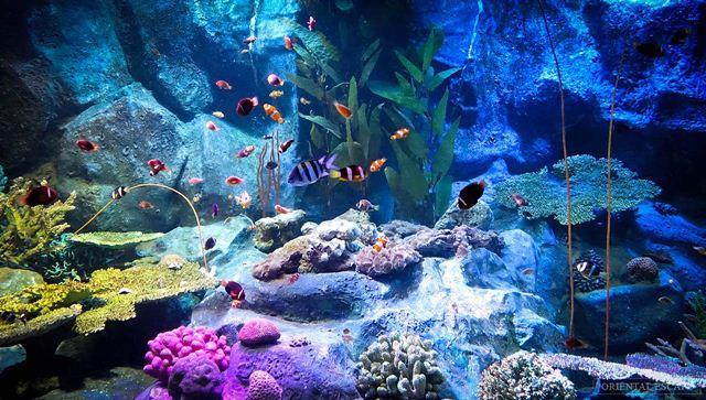 Underwater-world Pattaya luôn làm khách du lịch Thái Lan hài lòng