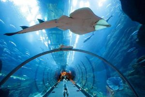 Cuộc phiêu lưu kỳ thú đến với Underwater World Pattaya, Thái Lan