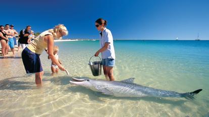Chơi với cá heo hoang dã