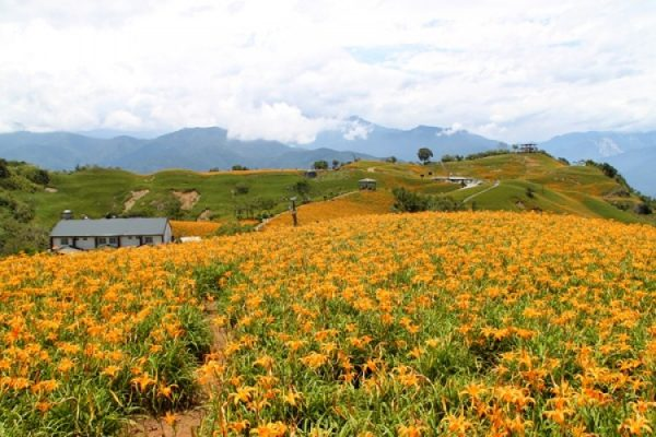 Đồi hoa kim châm núi Lục Thập