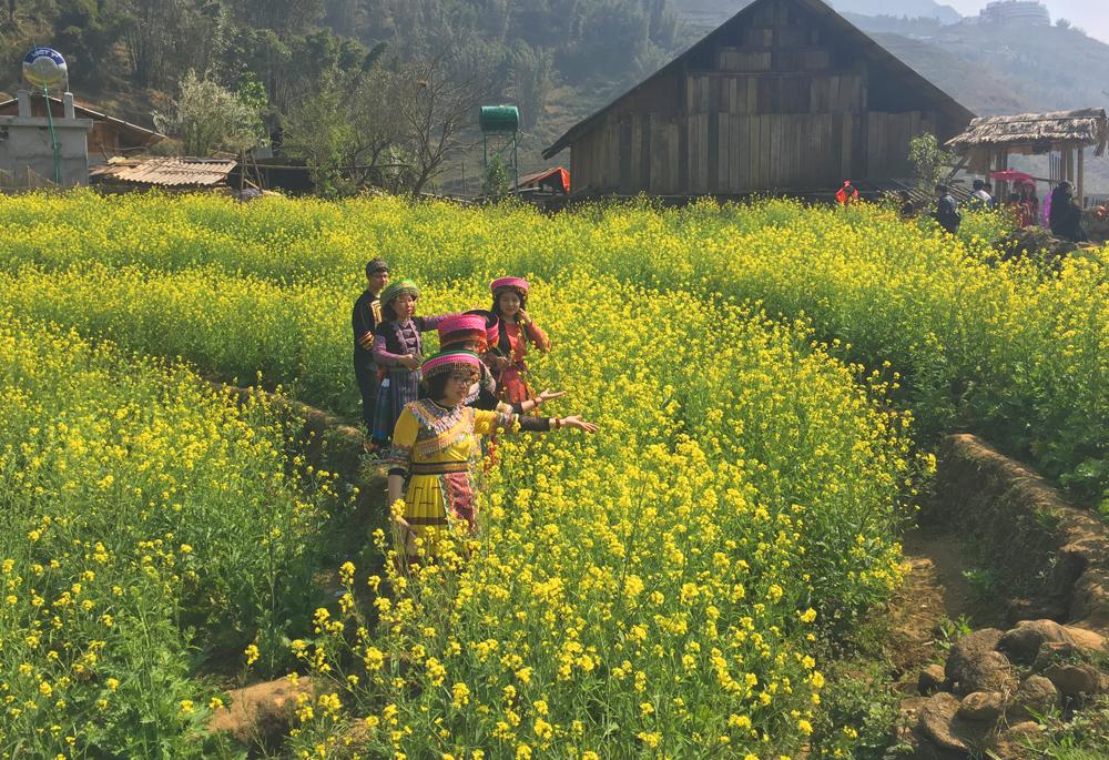 Hoa cải vàng ở bản Cát Cát
