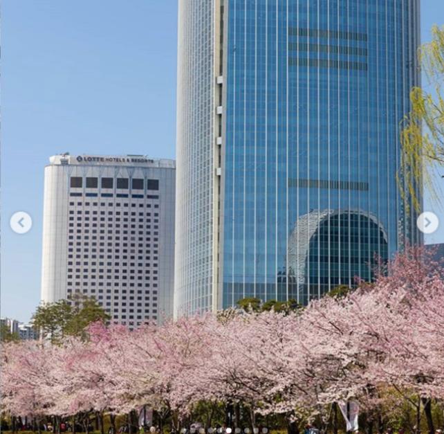 Lễ hội hoa anh đào ở Lotte Mall Seoul, Hàn Quốc