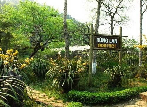 Vườn phong lan trên núi Hàm Rồng