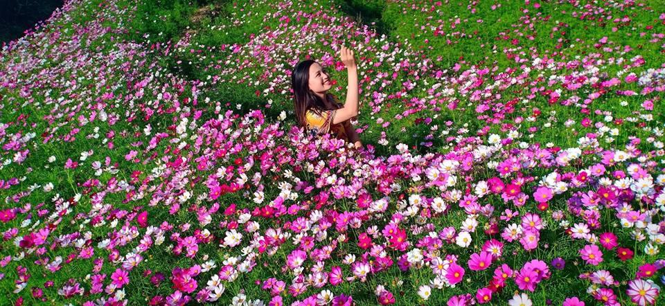 Vườn hoa cánh bướm Sapa