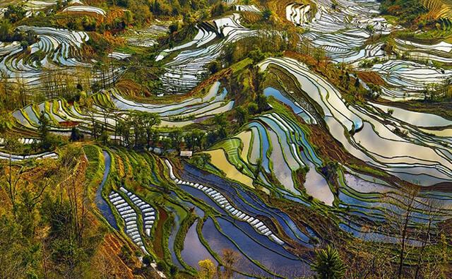 Ruộng bậc thang ở Quý Châu quả là một tác phẩm nghệ thuật hoàn mỹ, thể hiện sự sáng tạo và sự thích nghi tuyệt vời của con người nơi đây